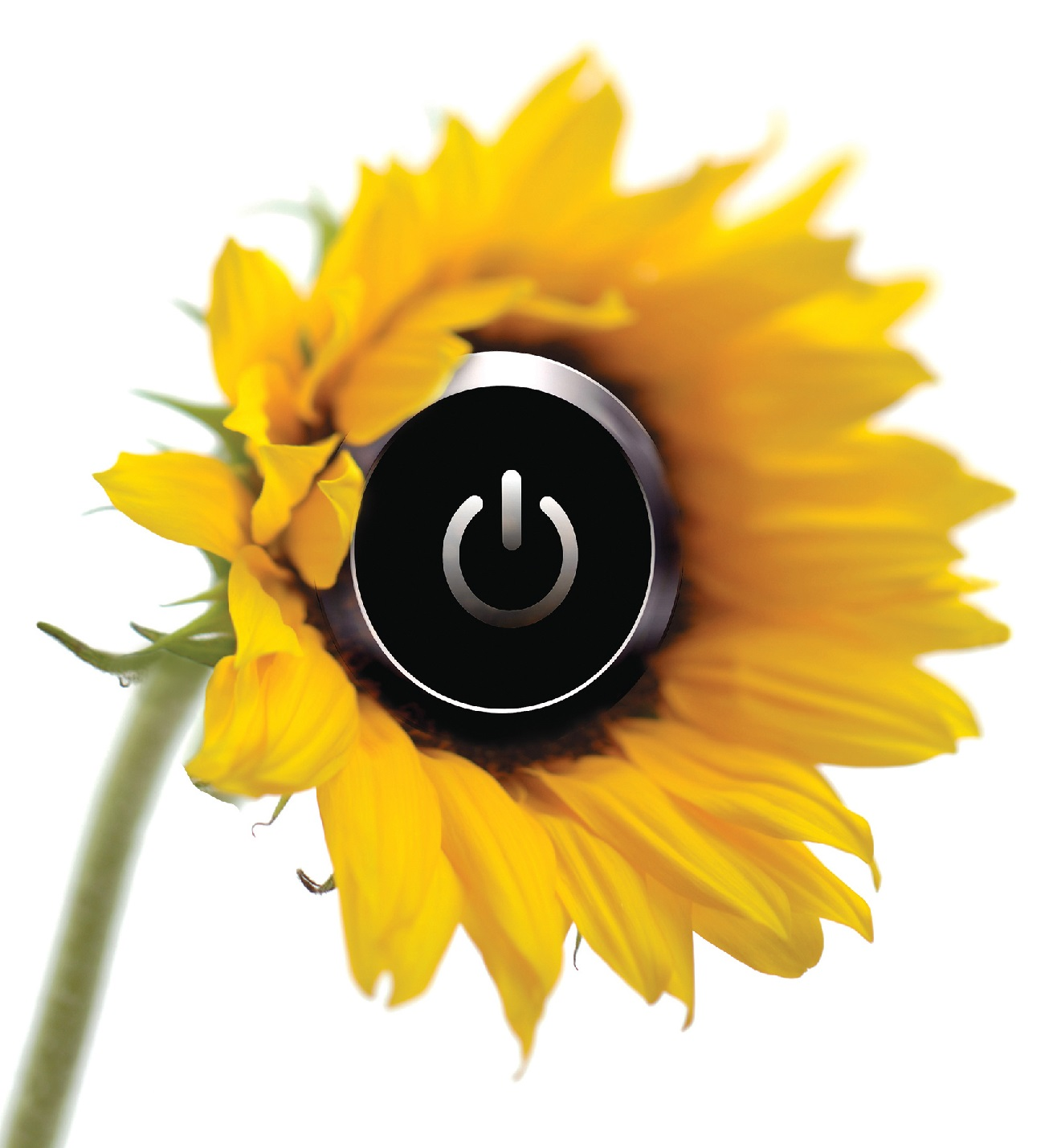 Sunflower with power button